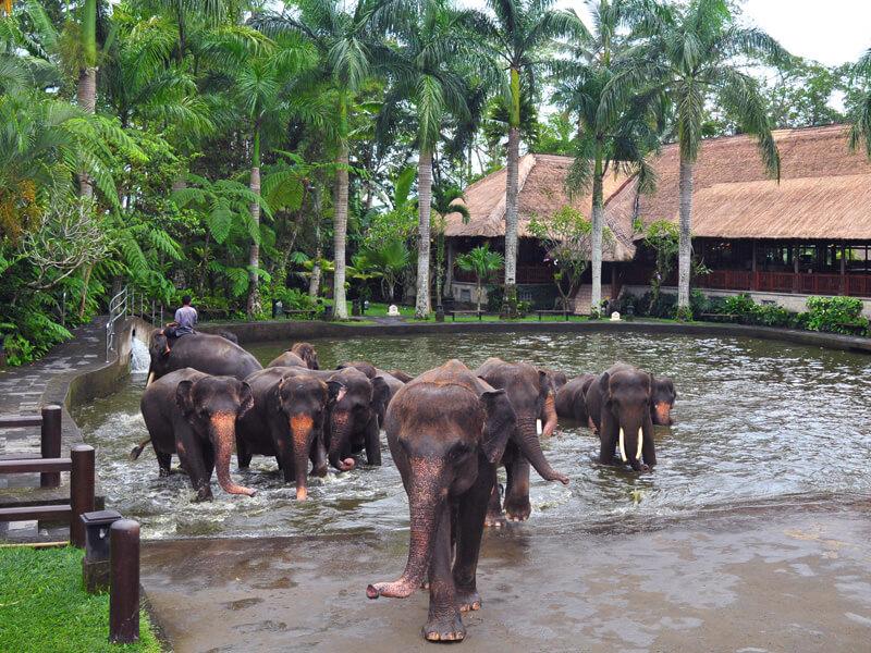 - Mason Adventures (Bali Adventure Tours)