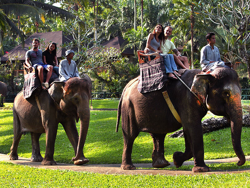 Elephant Safari- Mason Adventures (Bali Adventure Tours)