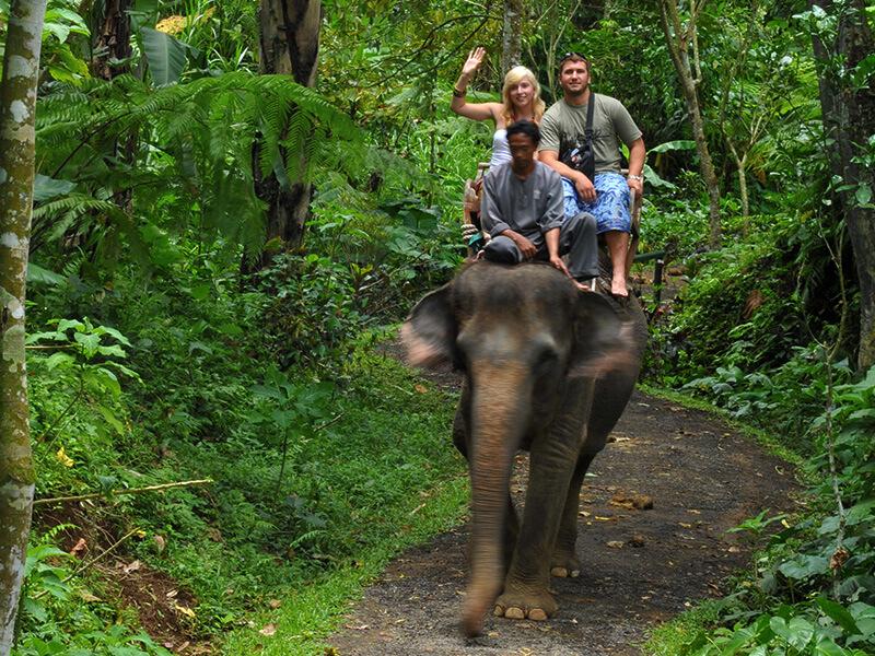 Elephant Safari - Mason Adventures (Bali Adventure Tours)