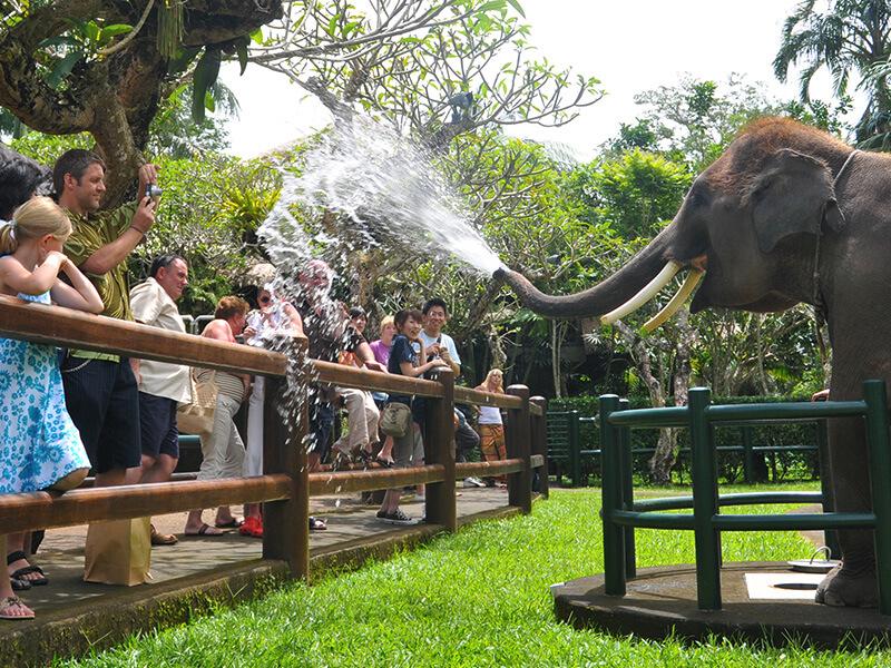 Elephants Safari - Mason Adventures (Bali Adventure Tours)