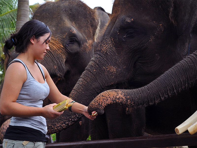 Bathe & breakfast with Elephants 3 - Mason Adventures (Bali Adventure Tours)