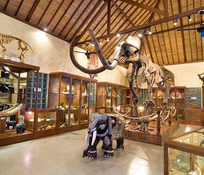 Elephant Museum 1 - Mason Adventures (Bali Adventure Tours)