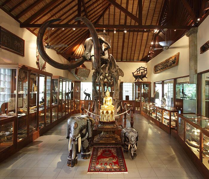 Elephant Museum 2 - Mason Adventures (Bali Adventure Tours)