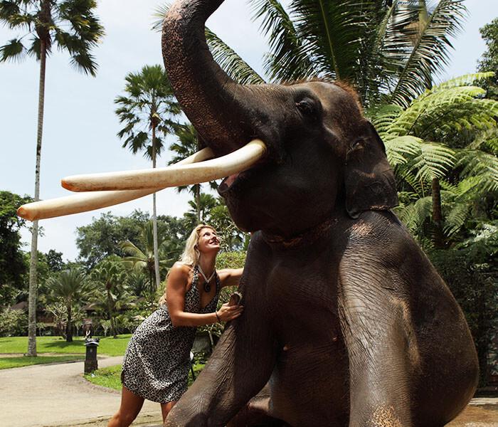elephant Wash 3 - elephant wash gallery - Mason Adventures (Bali Adventure Tours)