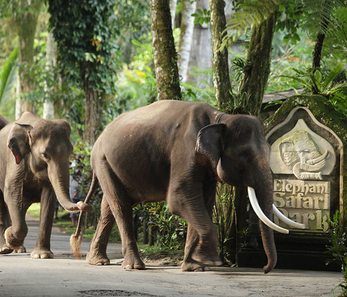 Elephant at Entrance 2 - Mason Adventures (Bali Adventure Tours)
