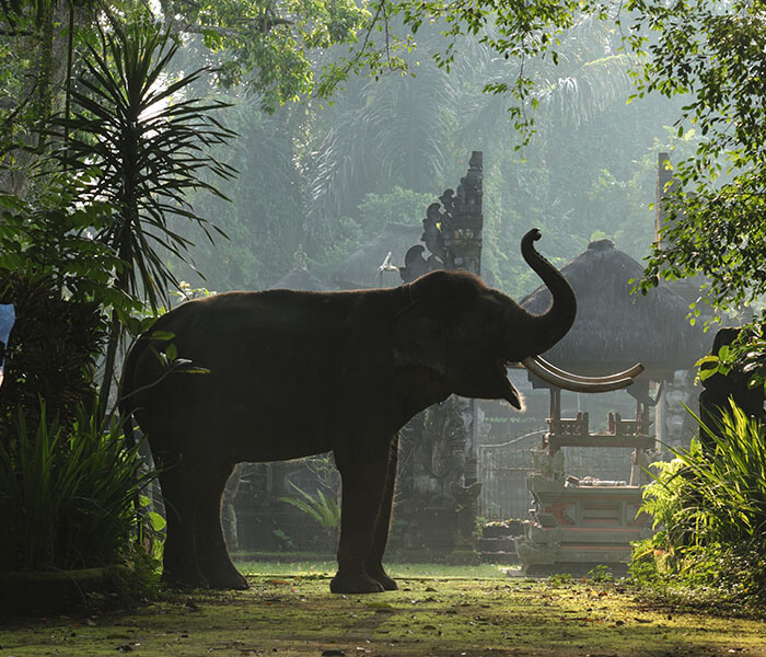 Elephant at Entrance 4 - Mason Adventures (Bali Adventure Tours)