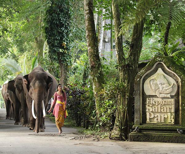 ELEPHANT AT ENTRANCE