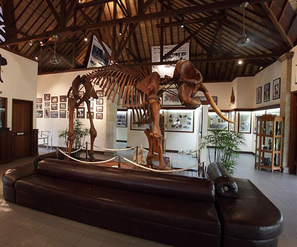 ELEPHANT PARK MUSEUM