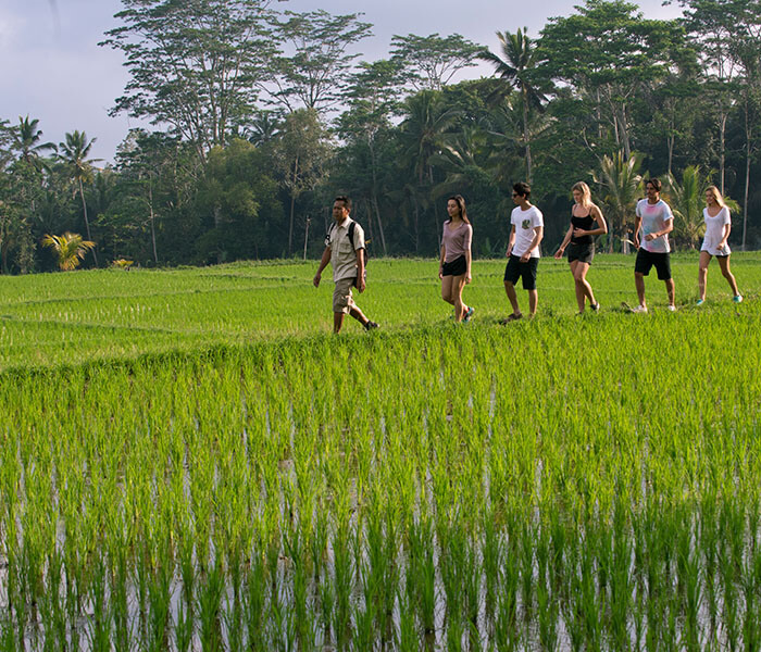 Tropical Trekking 4 - Cycling & Trekking Gallery - Mason Adventures (Bali Adventure Tours)